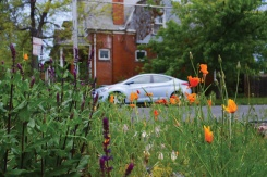 flowerscar