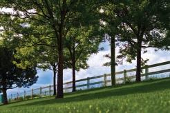 grasstreesfence
